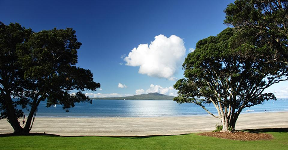 rangitoto trees